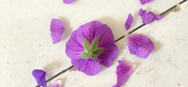 Edible flowers in the garden