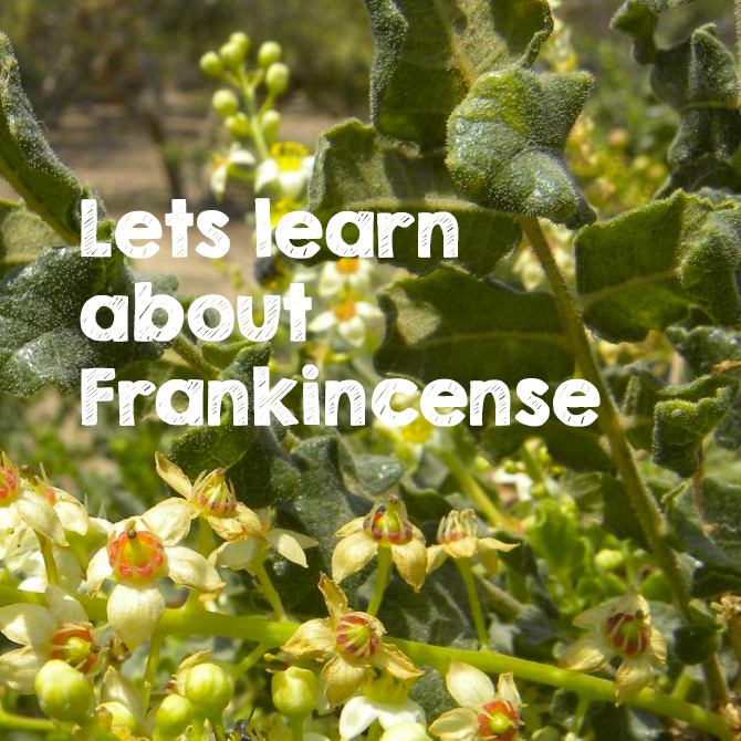 Frankincense essential oil facts