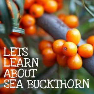 Skin & health benefits of Sea Buckthorn